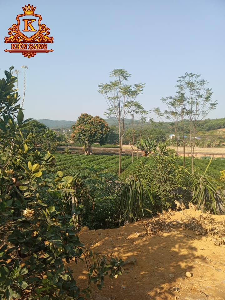 Khảo sát dự án thiết kế biệt thự nghỉ dưỡng tại Thái Nguyên